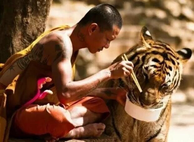 慈悲:最高贵的生活方式